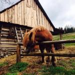 Kôň (Simona Slováková)