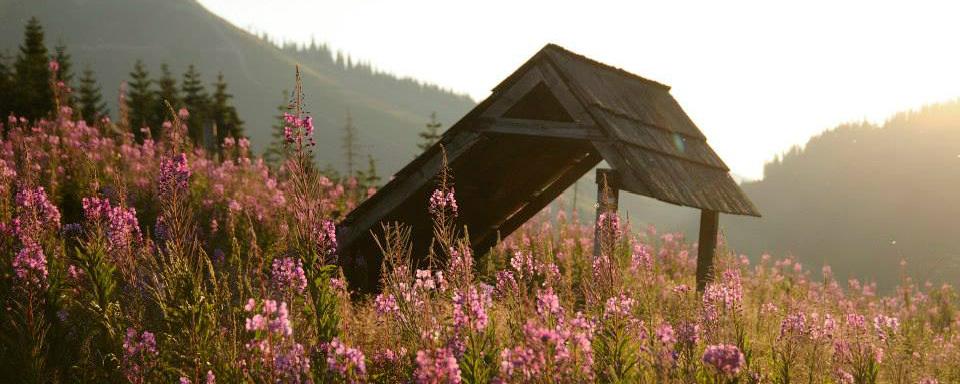 Turistický prístrešok v Nižnej Boci (Fedor Martiš)