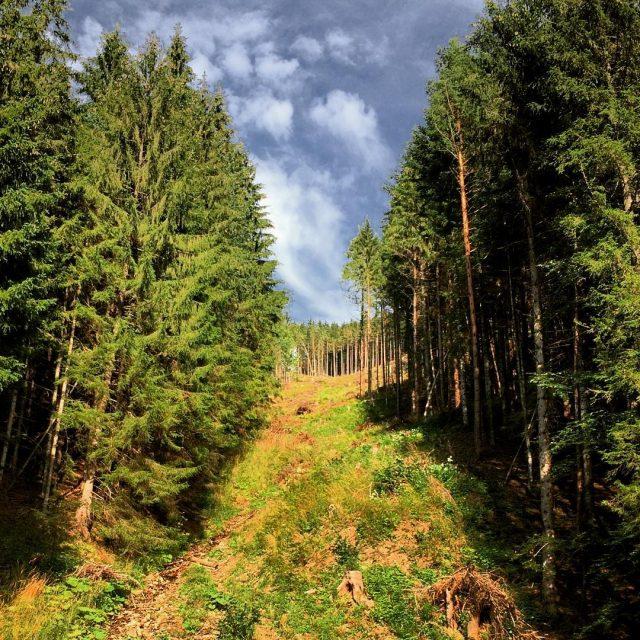 Medzi lesmi Nin Boca